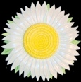 Daisy, Refrigerator Magnet or Ornament, Handpainted Gifts, Decor